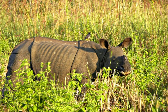 Exploring Wildlife Up and Close in Assam's Kaziranga National Park