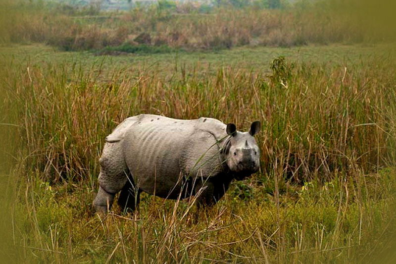 Visit Assam: The Land of Mystery, Mist and Magic
