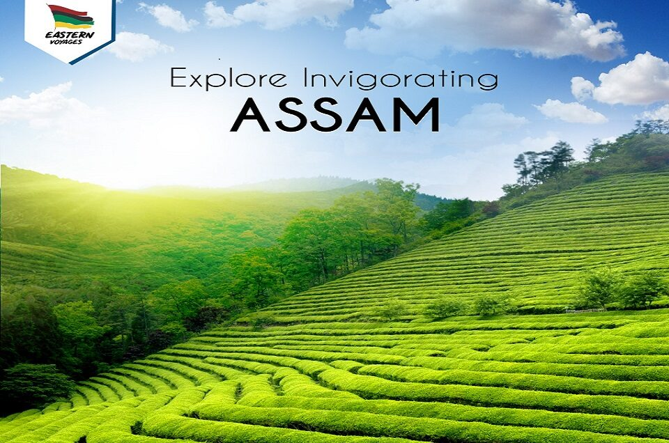 Exploring the Treasure Trove of Assam